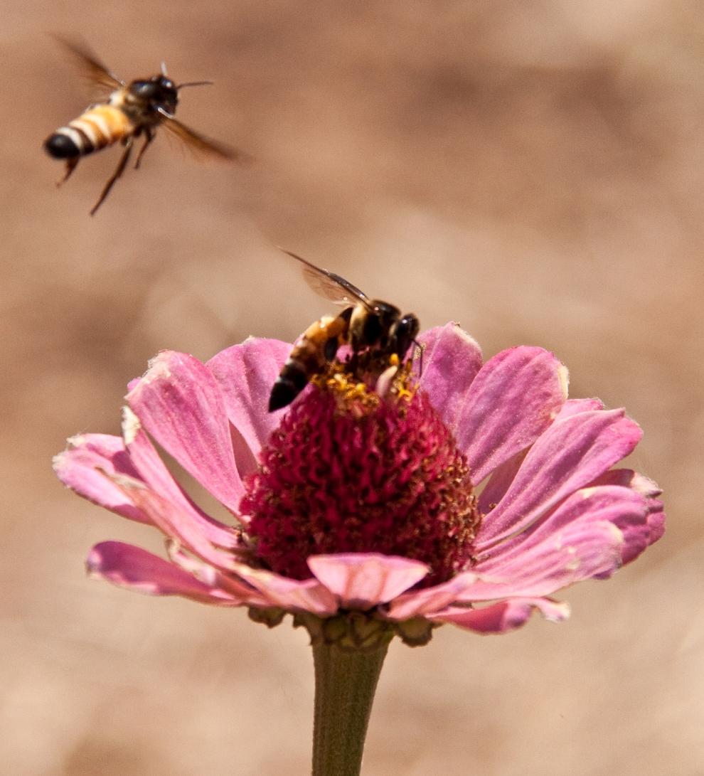 Bee Sting.jpg