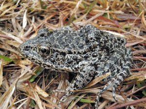 Frog-300x225